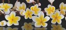 399. Foto plevele baldu stiklams